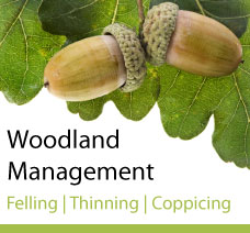 Woodland Management ad